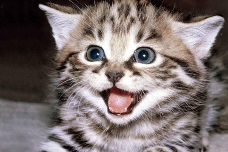あなたも見たら絶対笑みがこぼれちゃう!完全に笑っているネコの写真15選