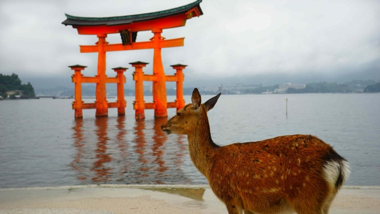"""観光名所で""""産まれたての小鹿""""を見ても絶対に触らないで。命を守るために注意喚起が広がる"""