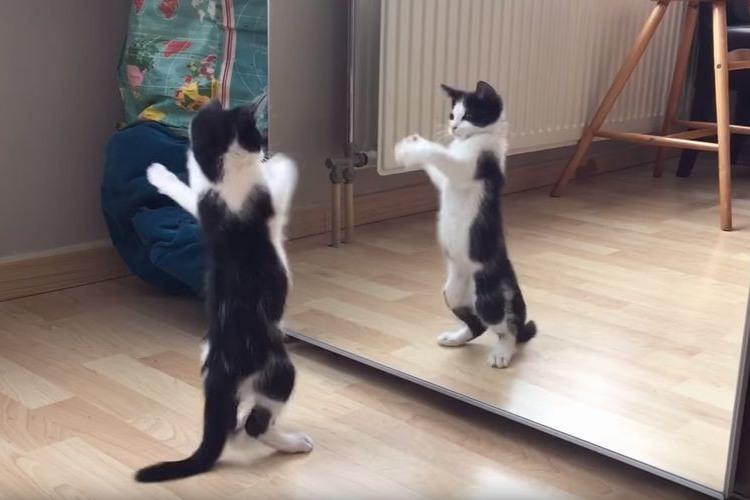 『チョッと!アンタ、ニャンなのさ!?』初めて鏡を見たニャンコの反応がベタすぎて可愛い