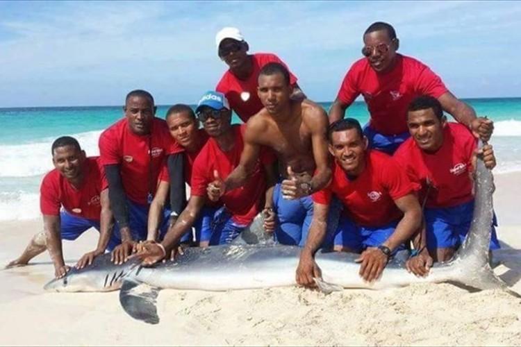 サメを浜に引き上げて記念写真→サメが死亡し世界中から非難の声 ドミニカ共和国