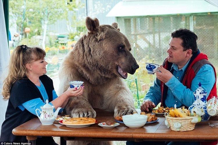 【動画】ロシア人家族と20年以上暮らしている熊…一緒にサッカー観戦、庭で水やり