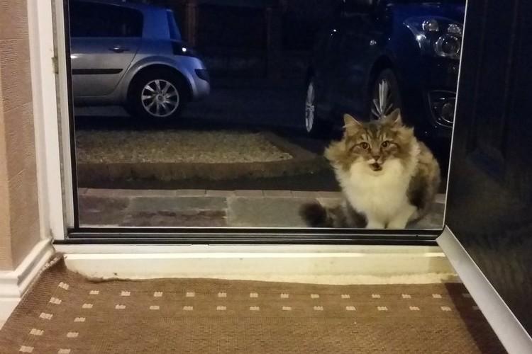 「お家に入れて欲しい...」しばらくして判明した野良猫がどうしても家に入りたがる理由が明らかに
