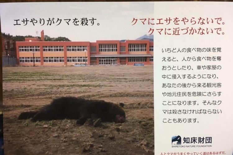 「エサやりがクマを殺す。」観光客が与えた1本のソーセージで悲しい最後となった熊の悲劇