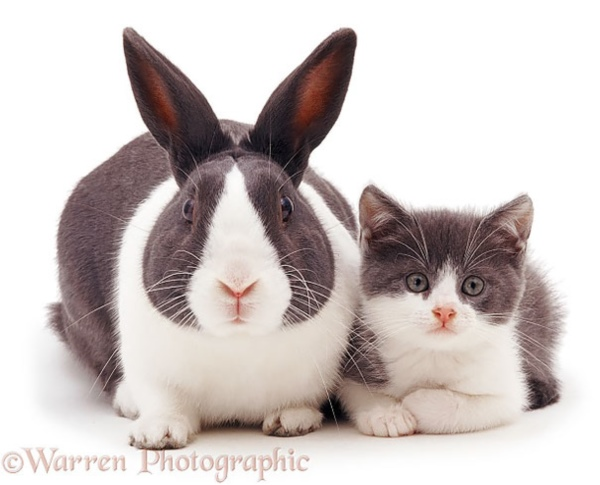 brother-from-another-mother-similar-animals-4-5786298fd9a61__605r