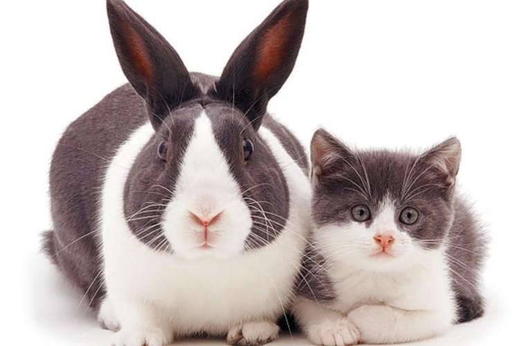 まるで兄弟みたい!?別の動物だけど並んでみたら見た目がことごとく似ている