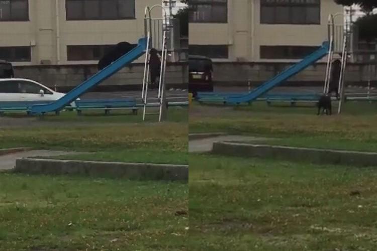 完全に楽しんでいる!2匹の犬が公園ですべり台で遊んでいる平和な光景