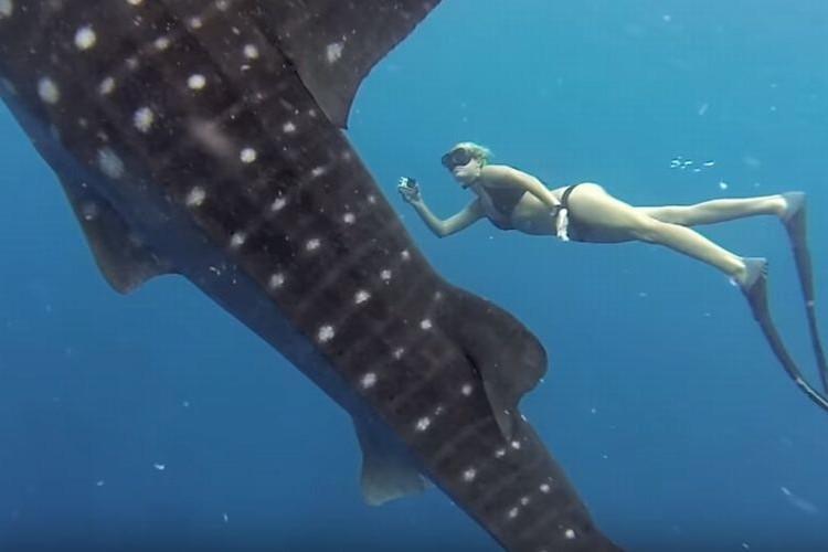 美女に迫りくる巨大ジンベエザメ、優雅な共演の映像がコワ美しい