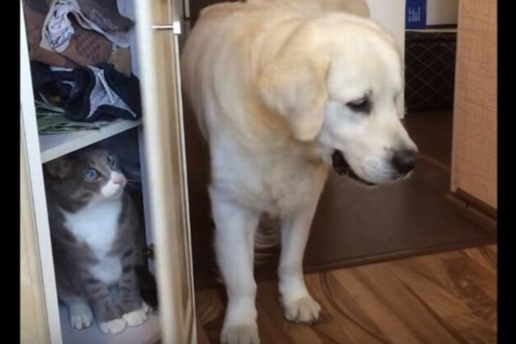 【6秒映像】棚に潜んでいたネコ、何も知らないワンコに閉じ込められる事件発生