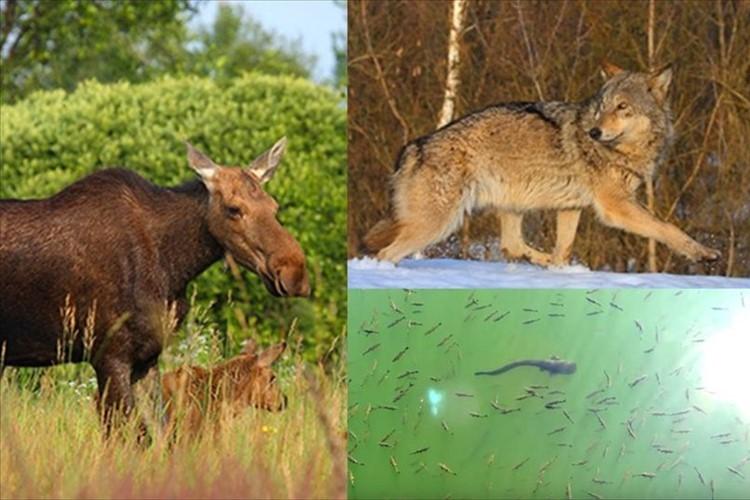 あれから30年…チェルノブイリは動物の楽園に 放射線よりも人間の存在が害だった