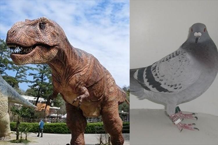 イメージが崩れるなぁ…恐竜の泣き声はハトの様な「クークー声」だった説が浮上!