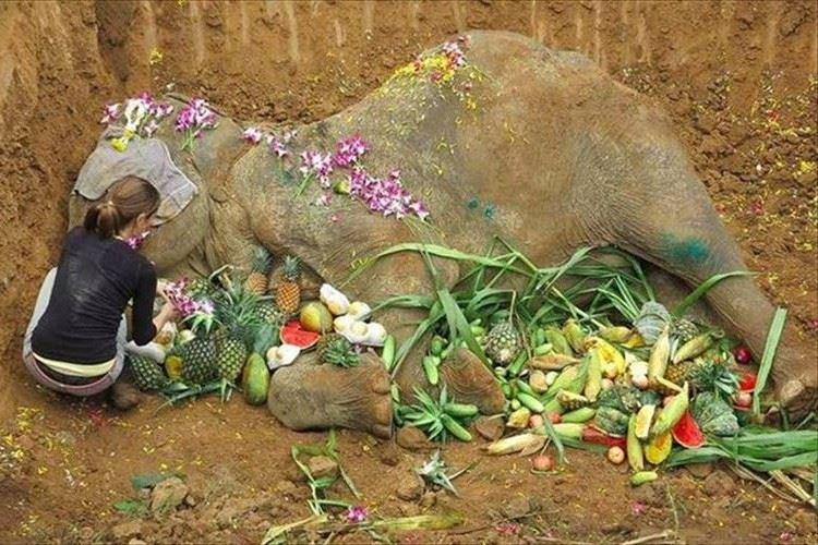 60年間虐待され続けたゾウ・・・保護されるも、衰弱がひどく1ヶ月で天国へ