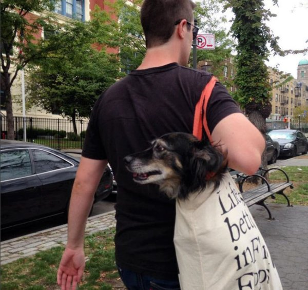 man-with-giant-dog-tote-bag-new-york-subway-2ar