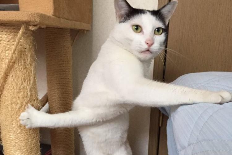 左右同時に爪が引っかかってしまった猫ちゃんがなんとも言えない顔でこっちを見ている