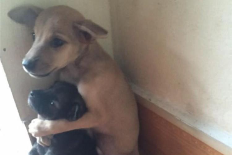 身寄りのない捨て犬がさらに小さな犬を抱きしめる姿にホーチミンの修行僧が救いの手を