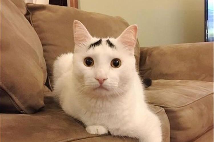 """なんか困ってる~!?""""まゆげ猫のサム""""がチャーミングすぎて萌える!"""