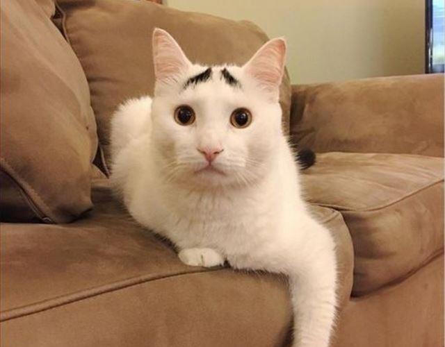 cat_top