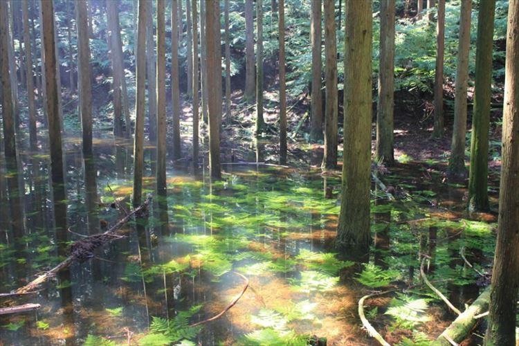 7年に一度しか現れない幻の池『池の平』の神秘性に心を奪われる…