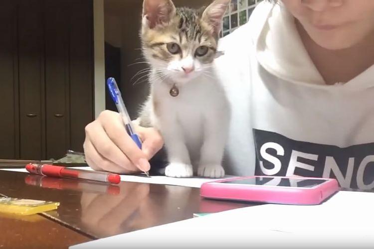 ぐぬぬ…ご主人の勉強をあの手この手で邪魔してくるネコちゃんが可愛すぎる