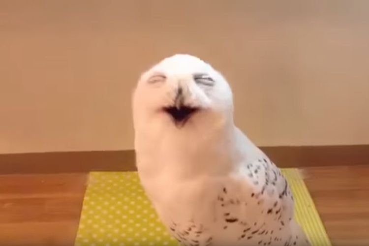 捧腹絶倒…フクロウの笑い声が美輪明宏さんの声にしか聞こえずお腹がよじれる(笑)