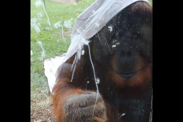 『ここから出してくれ』必死で窓ガラスを叩くオランウータンの姿に動物園のあり方を考えさせられる