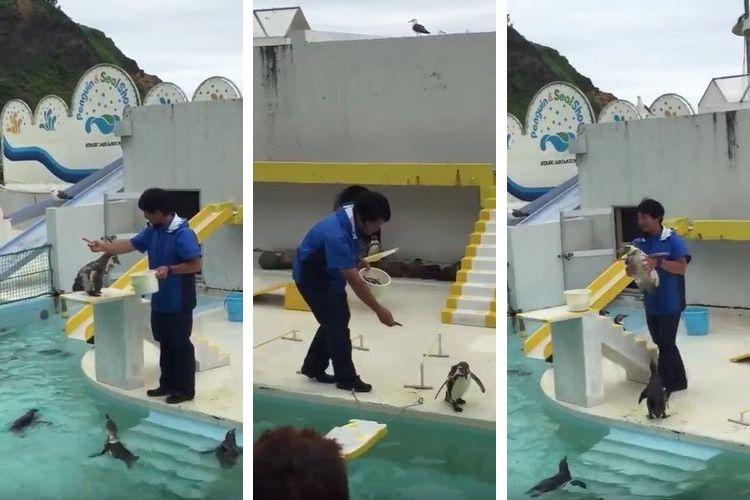"""もはやコント…(笑)おたる水族館のやる気のない""""ペンギンショー""""がグダグダ過ぎて逆にイイ!"""