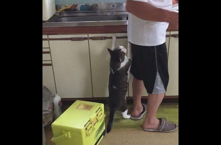 【動画】お魚をおねだりするネコちゃんを無視し続けたら…まさかの結末に度肝を抜かれる!