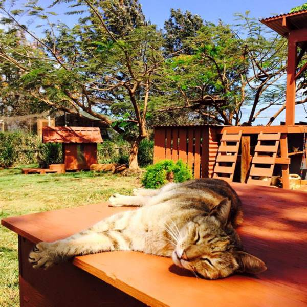 lanai-cat-sanctuary-hawaii-25r