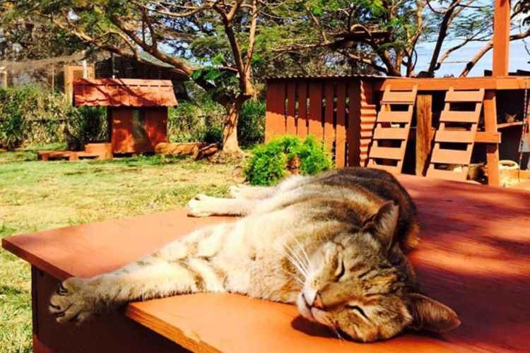 """ハワイに猫の楽園が。500匹の猫が自由に暮らす""""キャットサンクチュアリ""""に行きたい!"""