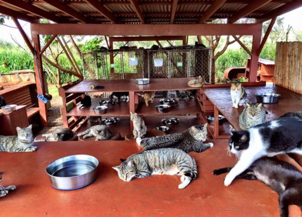 lanai-cat-sanctuary-hawaii-8r