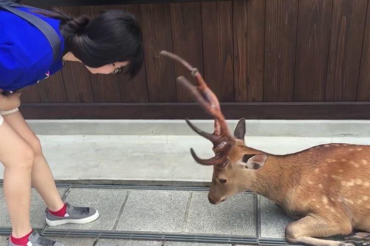 """海外で絶賛!日本人らしさあふれる奈良の鹿が""""礼儀正しい""""と話題に!"""