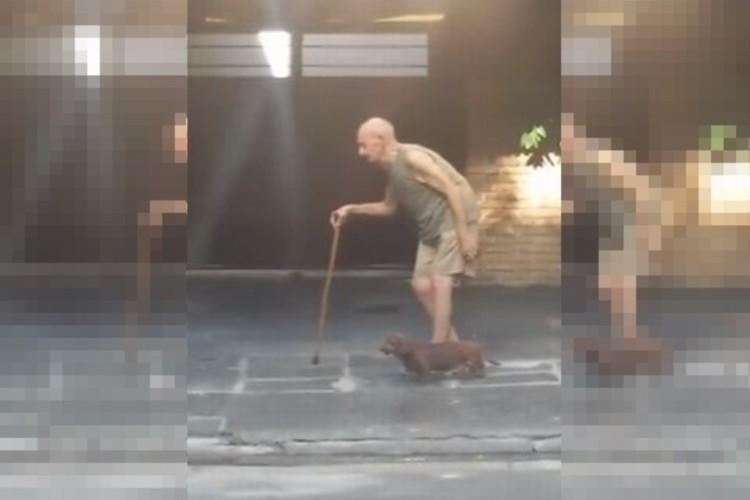 ゆっくりゆっくりと...杖をついて歩くおじいさんと一緒にあるく犬の優しさ