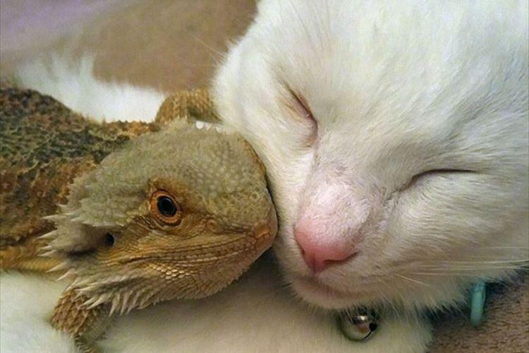いつでもどこでもいっしょ!トカゲとネコの友情に心がほっこり温まる