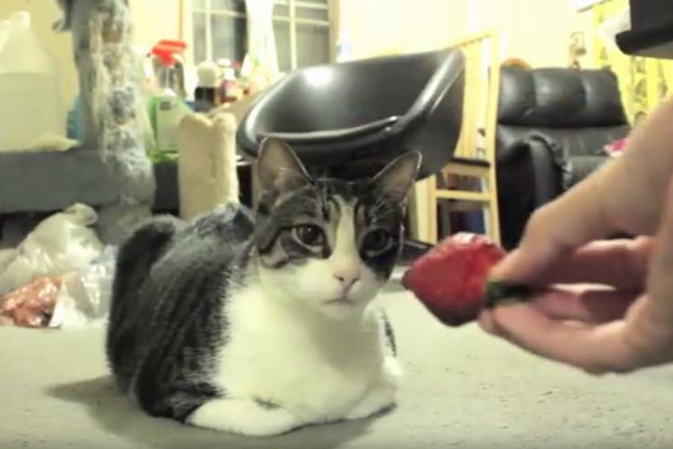 まさかの反応…ニャンコにイチゴを差し出したら意外な結末になった