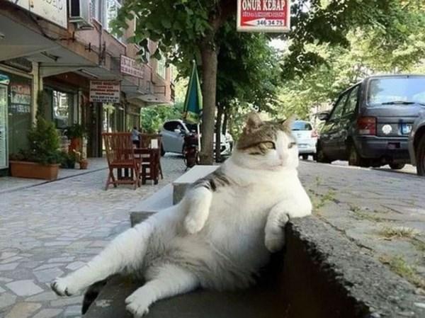 【トルコ】街中から愛された猫のトンビリくん、銅像になり再びくつろいで街を見守る