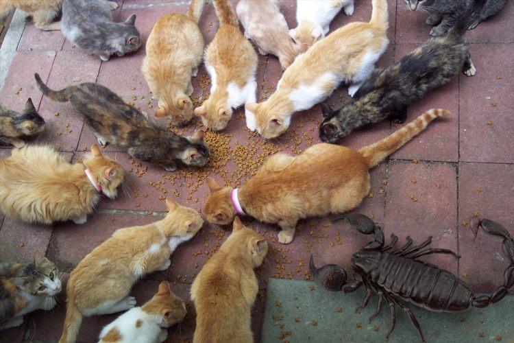 フォトショで巨大サソリを置いてみたら猫たちと同じ大きさだった!