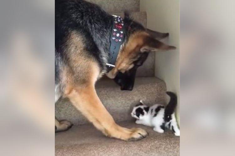 「よくがんばったね~!」階段をのぼる子猫をそばで手伝うワンコに胸キュンが止まらない!
