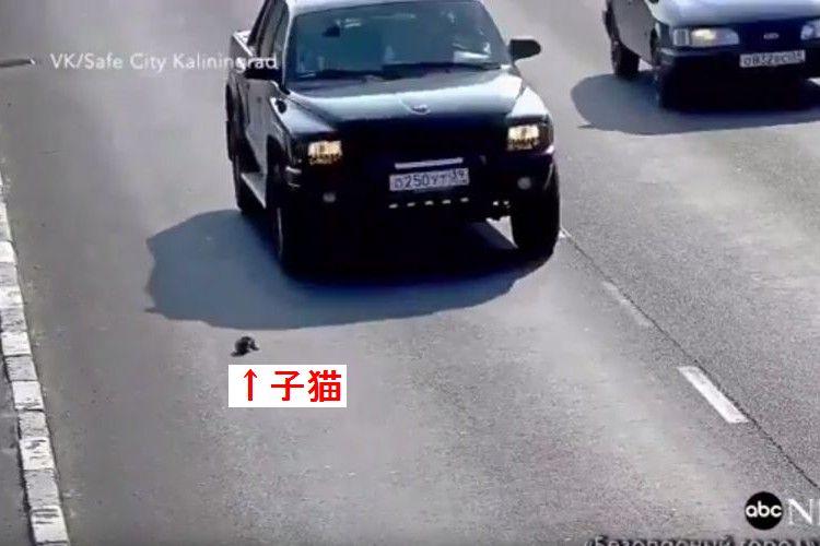 危ないっ…!高速道路で動けなくなってしまった子猫、そこへ一台の車が…