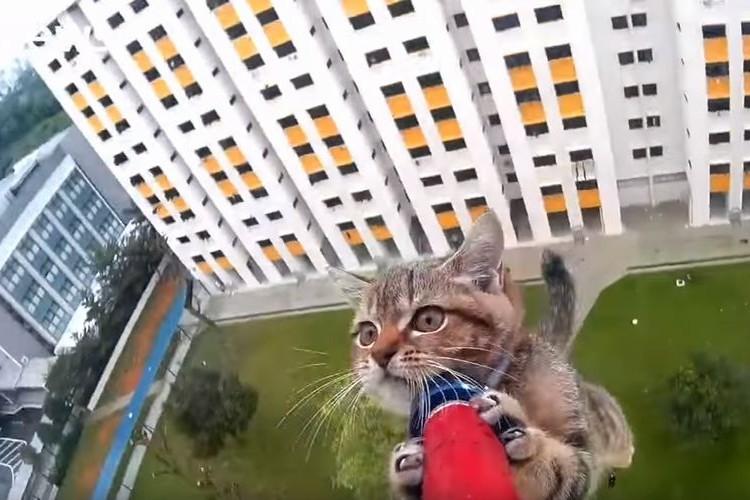 緊迫の瞬間…!12階の窓から落ちた猫の救出劇に心臓が止まりそう