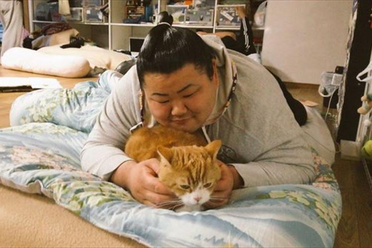 ニャンて素敵なミスマッチ!大相撲・荒汐部屋に住む2匹の猫ちゃんと力士たちとの関係が微笑ましい