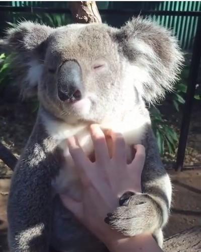 koala01_1