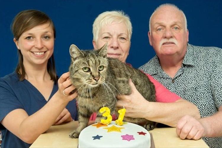 世界最高齢の猫 ナツメグさんが31歳になる! 家族の愛に包まれ、まだまだ元気いっぱい!