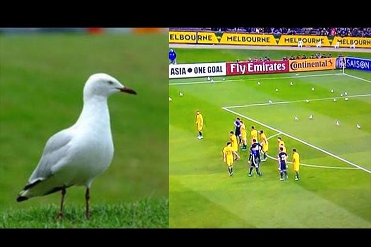 「白い鳥が多すぎて気になる!」サッカーロシアW杯アジア最終予選 日本対豪州戦