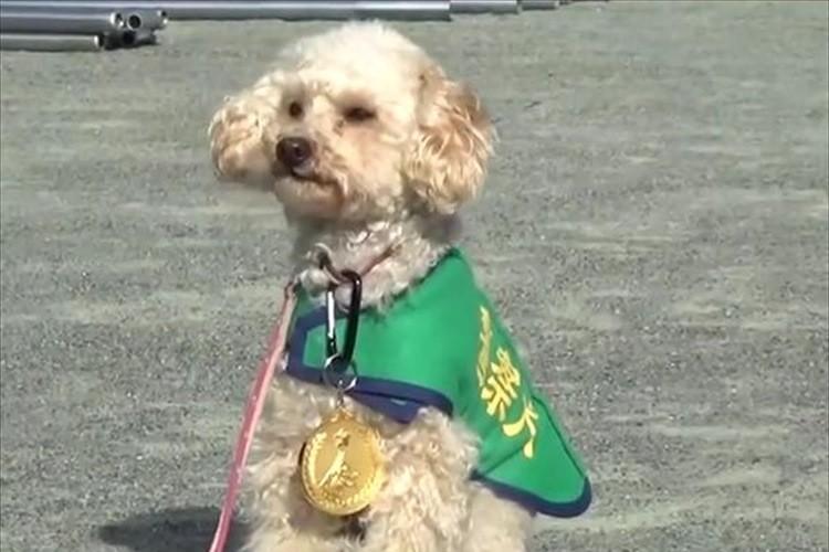 殺処分寸前で保護されたアンズちゃん 警察犬として活躍&子供達に勇気与える存在に!