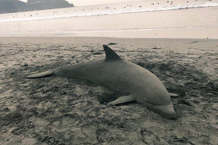 永遠に美しい海でありますように…メッセージの込められたサンドアートのイルカ