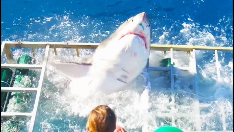 【恐怖】これを見たらもうサメ用安全ケージを信用できなくなる映像