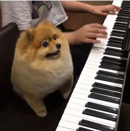 dog_01_450