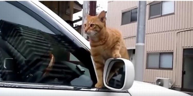 いいところ見せようとしてズリ落ちたネコ、その誤魔化し方がなんともかわいい