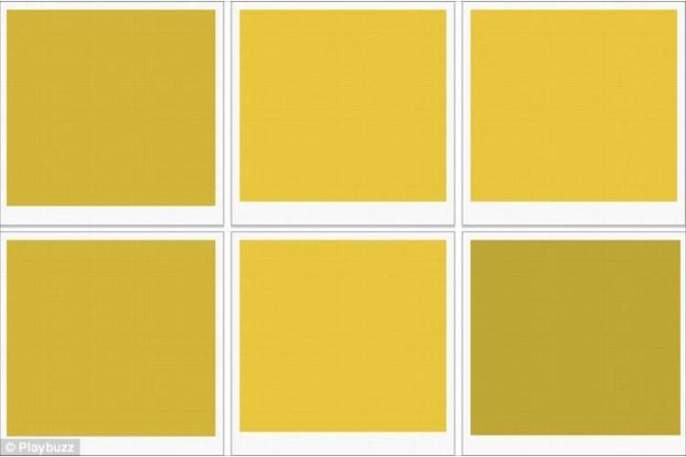 色彩診断『6枚のパネルから一番暗い色を選んでください。』あなたはいくつわかる?