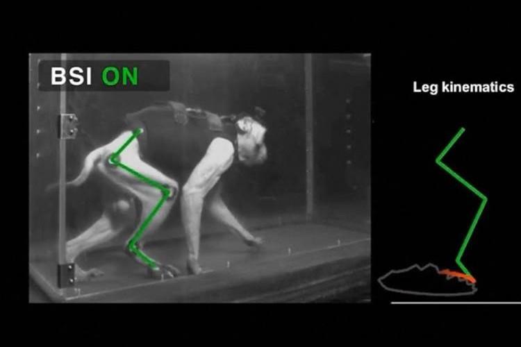「待っている人がたくさんいる」まひ治療に希望の光…脊髄損傷のサルが歩行機能回復