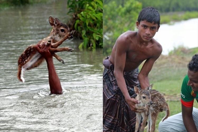 自分の身長より深い氾濫した川に飛び込み、子鹿を救出した勇敢な少年